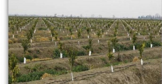 توسعه کشت محصولات باغی در اراضی شیبدار  استان مازندران