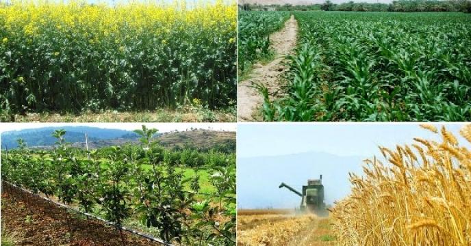 اراضی تحت کشت محصولات زراعی البرز