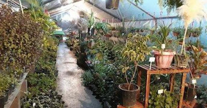 تامین کود برای گیاهان گلخانه ای در مازندران