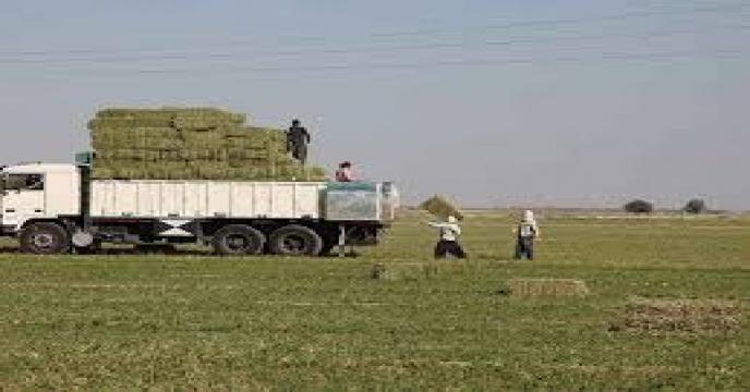 پیش بینی افزایش محصولات کشاورزی در شهرستان شاهرود