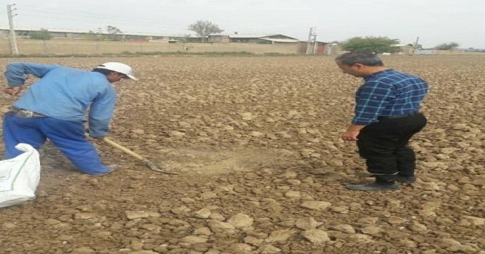 نمونه برداری خاک و آب از مزرعه گندم طرح الگویی تغذیه گیاهی