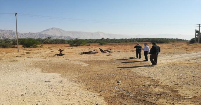 بازدید از نهالستان لاور خورموج با حضور مدیر شرکت خدمات حمایتی کشاورزی استان بوشهر و نماینده حقوقی شرکت خدمات حمایتی کشور