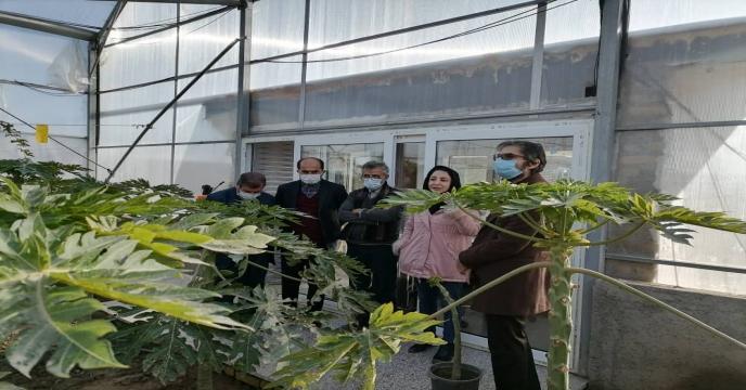 بهره برداری از اولین گلخانه تولید پاپایا توسط استاندار البرز
