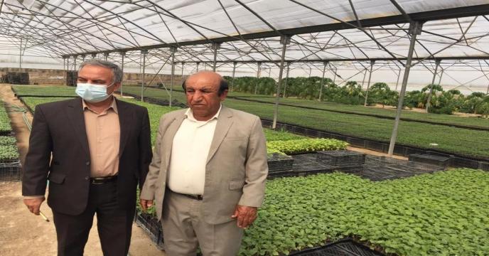بازدید مدیر شرکت خدمات حمایتی کشاورزی استان بوشهر از گلخانه تولید نشاء در بخش ارم و بوشکان