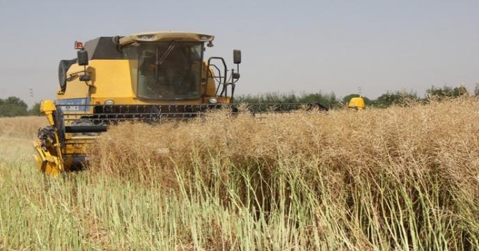 متوسط عملکرد زراعی در استان البرز 3 برابر متوسط کشوری است.