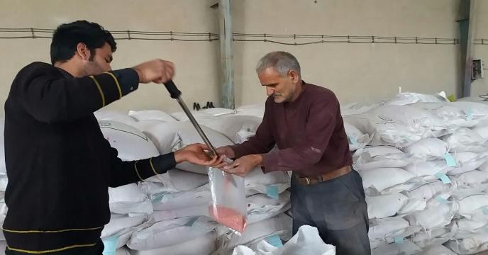 آغاز عملیات بوجاری بذر گندم گواهی شده حیدری در استان مرکزی – شهریور ماه 1399