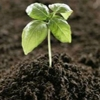 اهمیت رعایت تناسب مصرف کود های کشاورزی در کنترل چالش های مختلف کشاورزی، اهمیت آزمون خاک، و نقش شرکت خدمات حمایتی کشاورزی در این زمینه