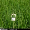 اهمیت مبارزه غیر شیمیایی بر علیه آفات کشاورزی