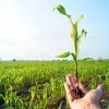 اهمیت مبارزه غیر شیمیایی بر علیه آفات کشاورزی(قسمت دوم)