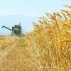 بررسي روند قيمت تضميني محصول غلات در ايران مطالعه موردي(گندم، جو و ذرت)(1395- 1390)