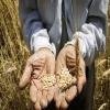 بررسي تطبيقي وضعيت موجودي سرماية خالص در اقتصاد ايران با تأكيد بر بخش كشاورزي