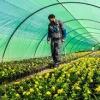 کشاورزی بدون آب در بیابان