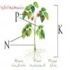 نقش پتاسیم در تولید محصولات کشاورزی سالم
