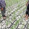 نقش عناصر غذایی در بهبود اثرهای تنش کمبود آب
