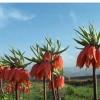 بررسی اثر چرای دام بر ترکیب و تنوع پوشش گیاهی الیگودرز مطالعه موردی منطقه دورک و ارجنک