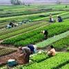30 چالش  و آسیب بازدارنده توسعه کشاورزی