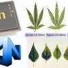 اهمیت عنصر روی در تغذیه گیاهی