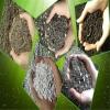 «آشنایی با کودهای کشاورزی» بخش پایانی : کودهای زیستی