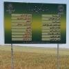 برگزاری كلاس  و بازدید  از مزارع تکثیری بذر گندم در يزد