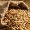 توزیع بذر گندم آبی و جو آبی و دیم