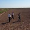 بازدید از  مزرعه طرح پایلوت دشت عباس استان ایلام