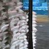 توزیع بیش از 1743 تن کود غیرتکلیفی در مازندران